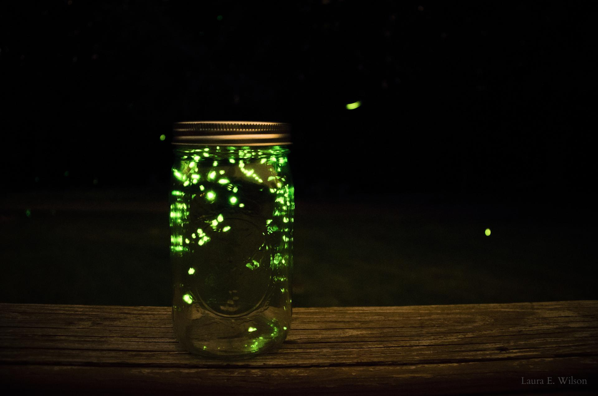 What We Can Learn from Lightning Bugs | Elizabeth B Crook for Fireflies In A Jar Cover Photo  285eri